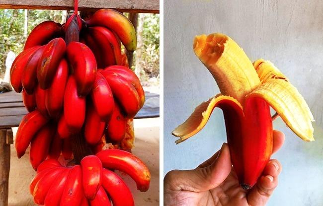 Сладкие плоды совкусом малины (некоторые чувствуют манго), вкоторых содержится гораз