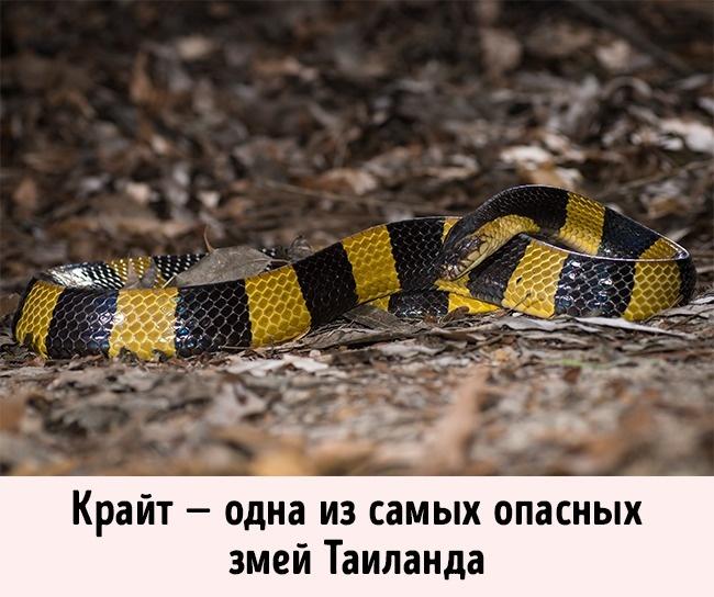 © Rushen/flickr  Опасные змеи могут подстерегать практически влюбой экзотической стране. Одна