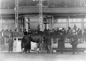 Подготовка лошади к соревнованиям на Семеновском плацу.