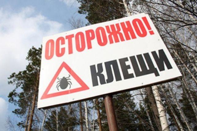 ВИркутской области болезнь Лайма подхватили уже 17 человек