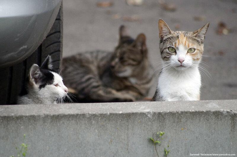 91Б. Анненская улица. 11.07.17.04. котики...jpg