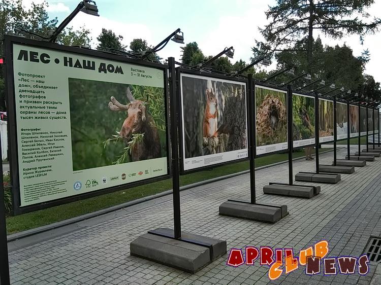Фотовыставка «Лес — наш дом»
