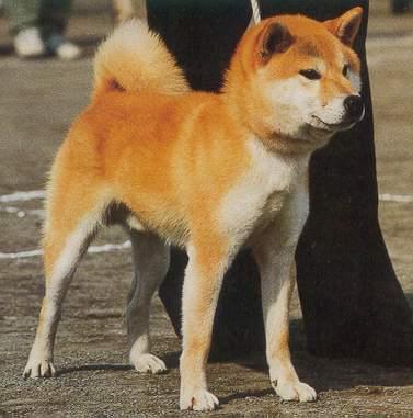 Kouryu Go Shimakazesou.jpg