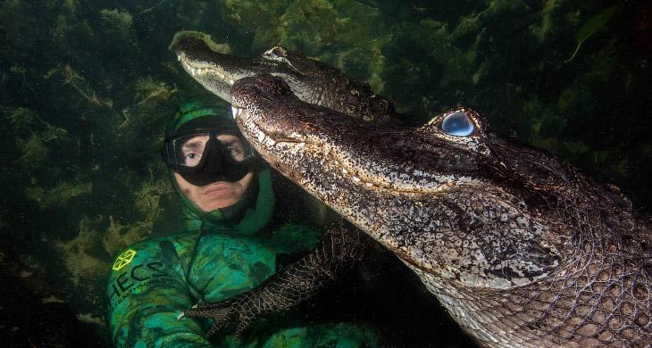 1. Во Флориде насчитывается около 1,3 миллиона аллигаторов. (Фото Chris Gillette and Michael Do