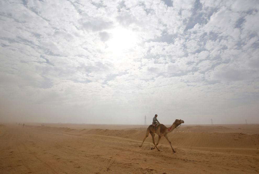 9. (Фото Amr Abdallah Dalsh | Reuters):