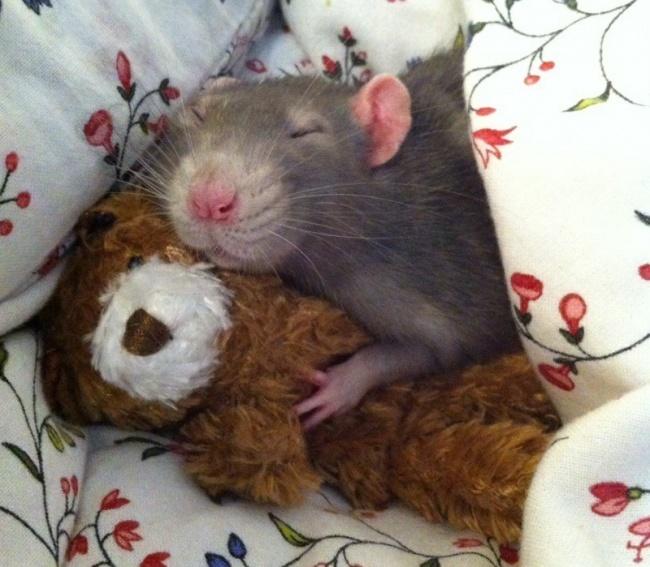 © imgur.com   Все животные любят, когда заними ухаживают