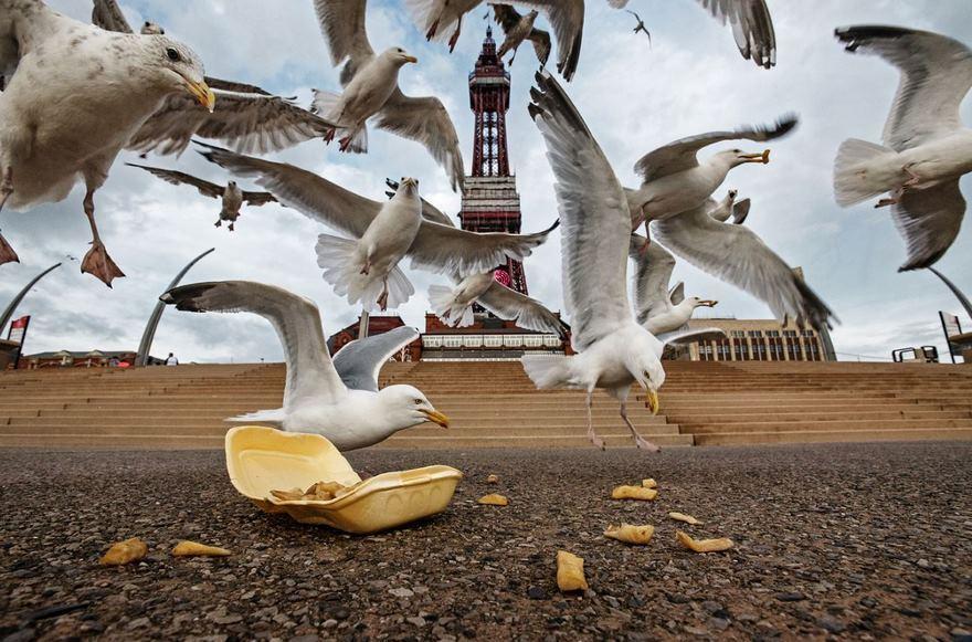 Фотограф выслеживает диких животных, которые просачиваются к людям в города