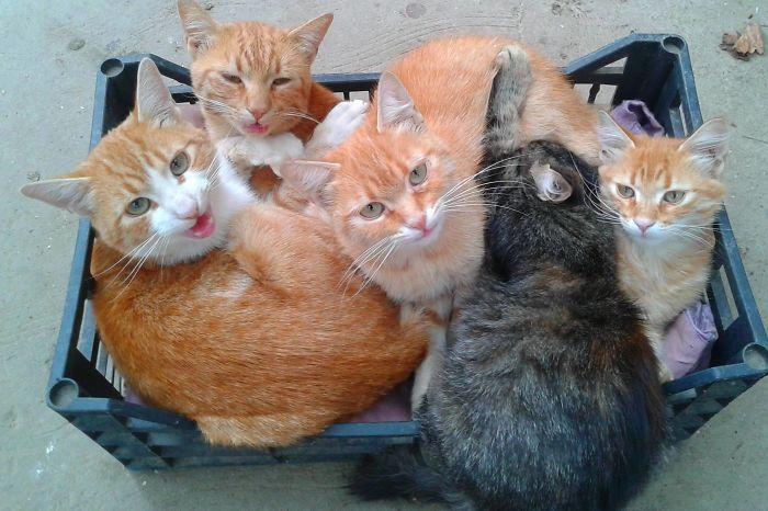 Забавные фотографий, доказывающих, что кошки помещаются везде