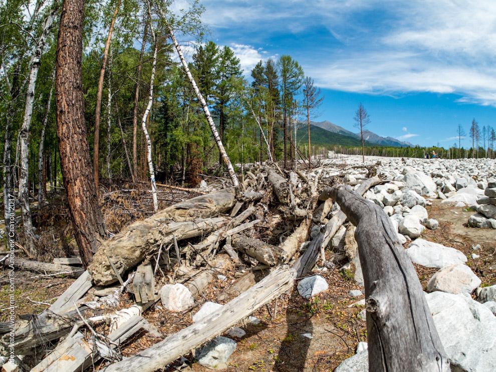 5. Мы стоим на многометровой насыпи, а раны от летящих камней на деревьях поднимаются ещё выше.