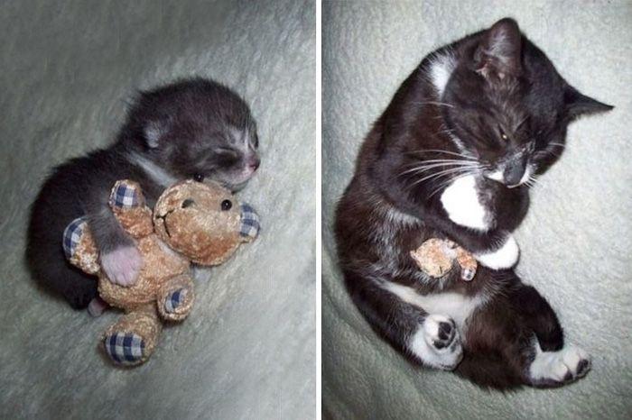 20 взрослых домашних животных, которые любят свои игрушки так же, как в детстве (20 фото)