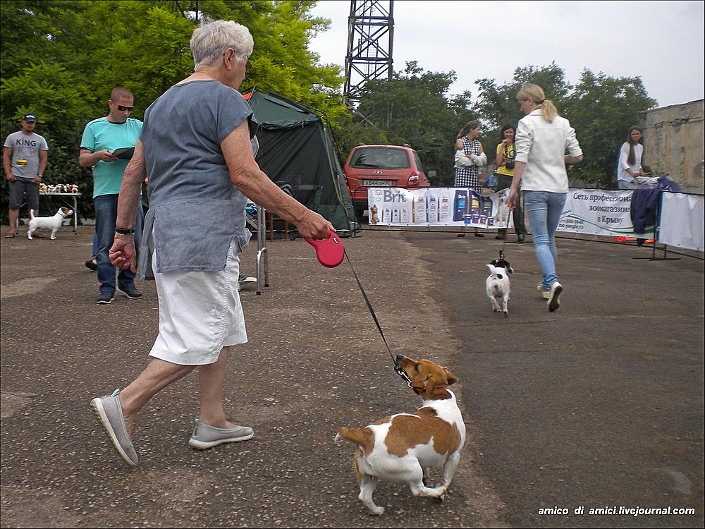 фото собаки жужи