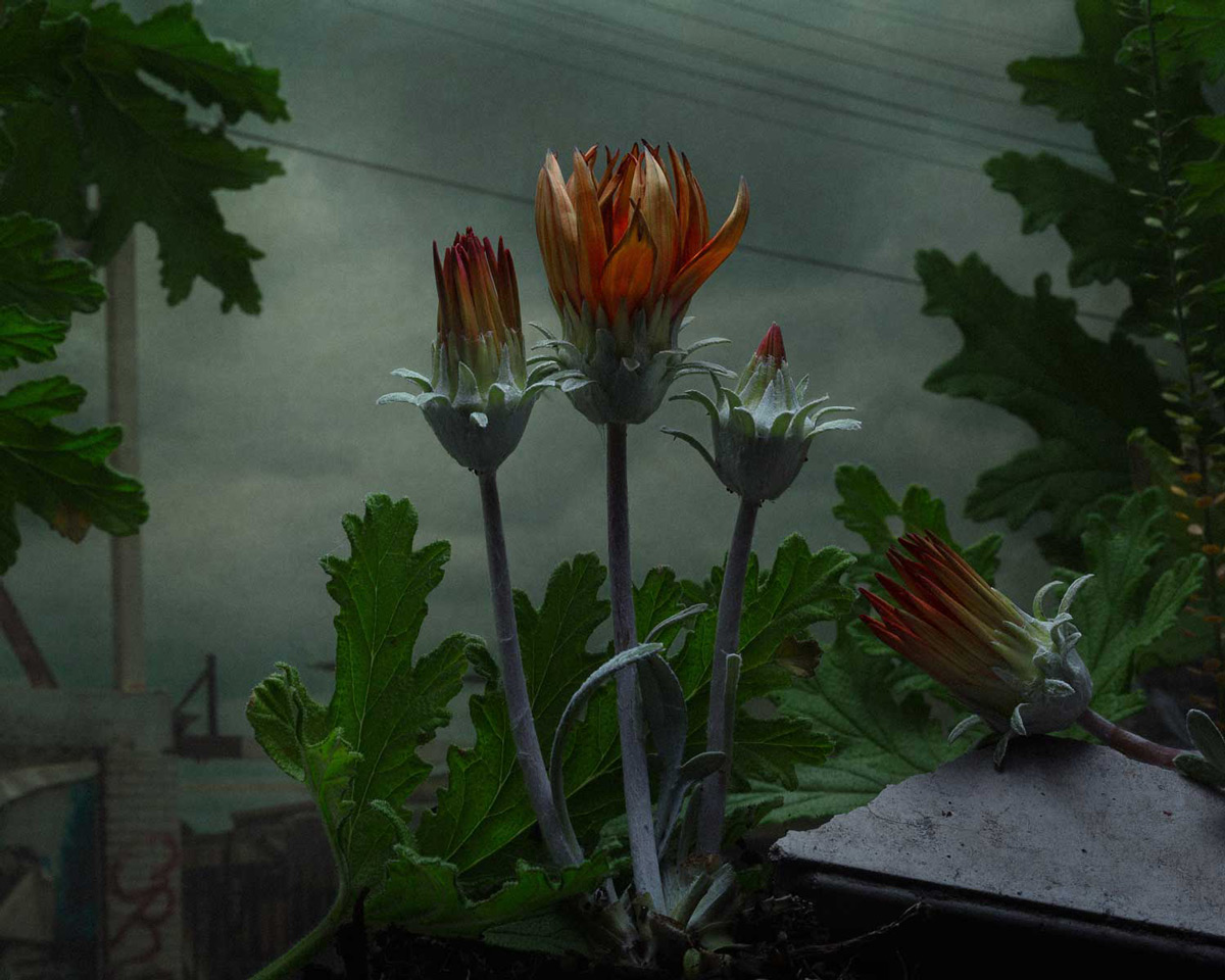Weeds and Flowers Recast as Shadowy Subjects in Daniel Shipp's Dramatic Photographs (11 pics)