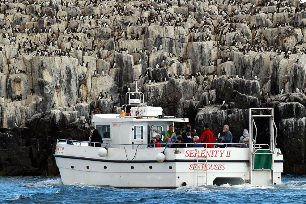 Знакомьтесь, местный житель, серый тюлень, он же тевяк. (Фото Reuters | Nigel Roddis):