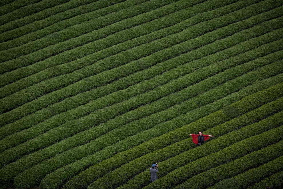 Сезонная работница, приехавшая из Шанжао в провинции Цзянси, позирует фотографу на чайной плантации