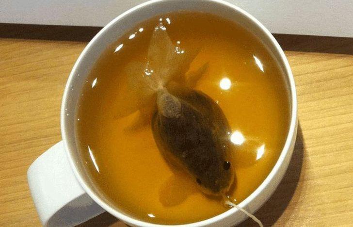 Чайные пакетики, превращающиеся в чашке в золотых рыбок (5 фото)