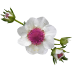 BCD_FloweryDay_el (33).png