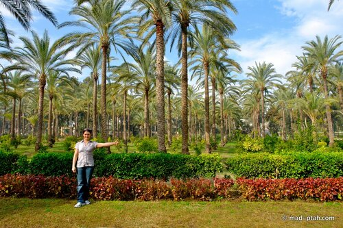александрия, египет, парк монтаза