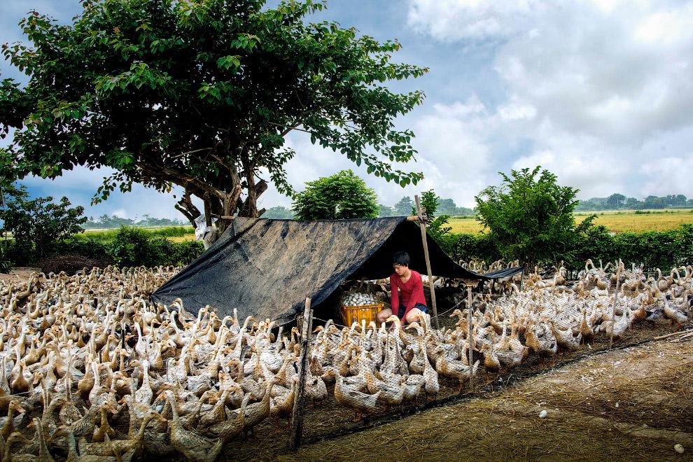 16. Женщины выращивают овощи на продажу на севере Индии. (Фото Tatiana Sharapova):
