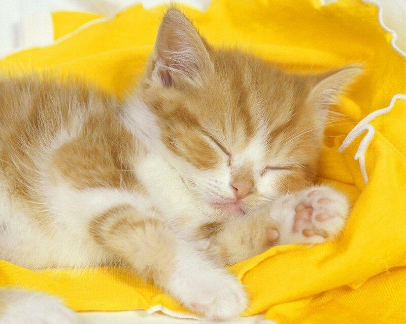 """Котенок на желтом """" - Схемы вышивки - kit_nata - Авторы - Портал  """"Вышивка крестом """" ."""