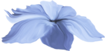 ial_elb_flower4.png