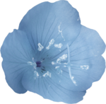 ial_elb_flower6.png