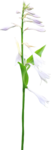 ial_elb_flower7.png