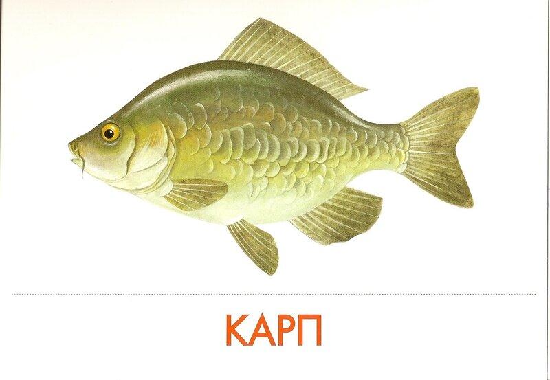 Плов В мультиварке рецепты с фото на RussianFoodcom 13