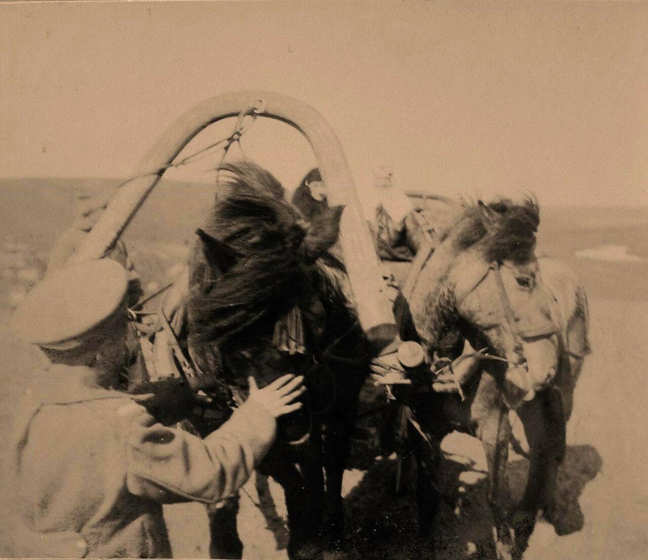 36. Сестры милосердия в казанском тарантасе на сибирских лошадях на пути к пехотным окопам