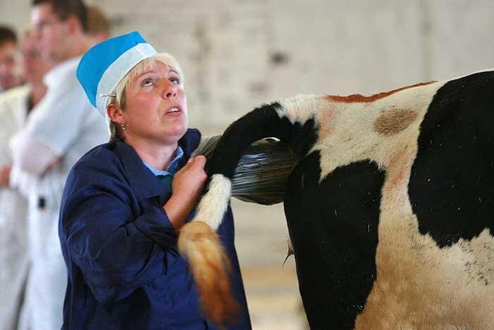 должностная инструкция осеменатора коров