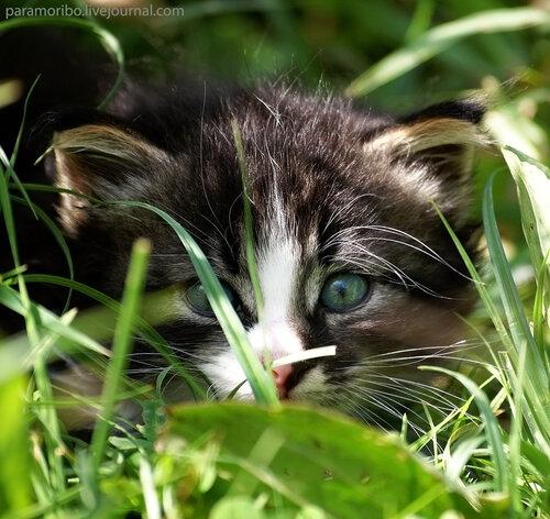 Мама, я ведь хорошо спрятался?!