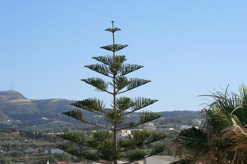 Вид с нашего балкона Dimitrios Village