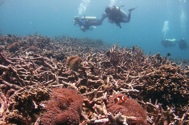 Divers swim above a bed of dead corals off Malaysia's Tioman Island in the South China Sea, 2008.