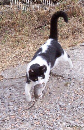 Бася Поймала Мыша