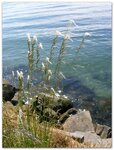 Titlow Beach Park (Tacoma) 13
