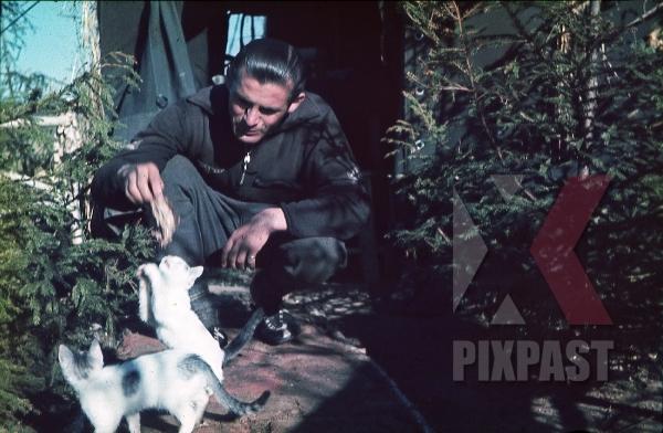 stock-photo-german-luftwaffe-flak-officer-in-sport-suite-feeding-cat-pet-tent-zeltbahn-russia-1941-3-flak-abt-701--8034.jpg