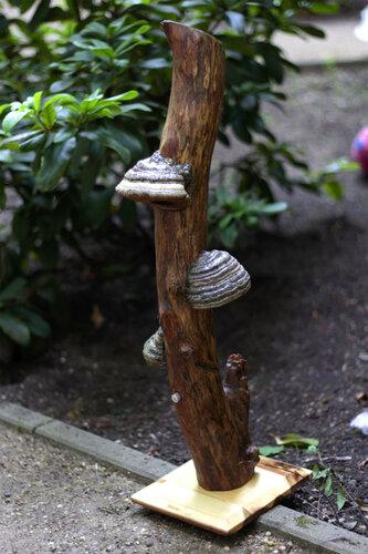 Светящиеся грибы - светильники