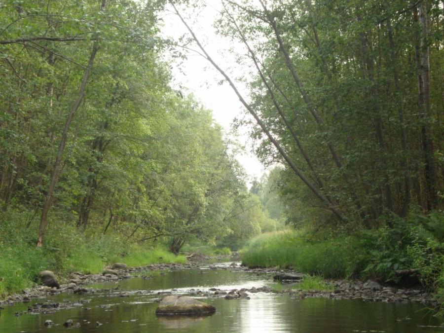 Река Витка, быстрина.