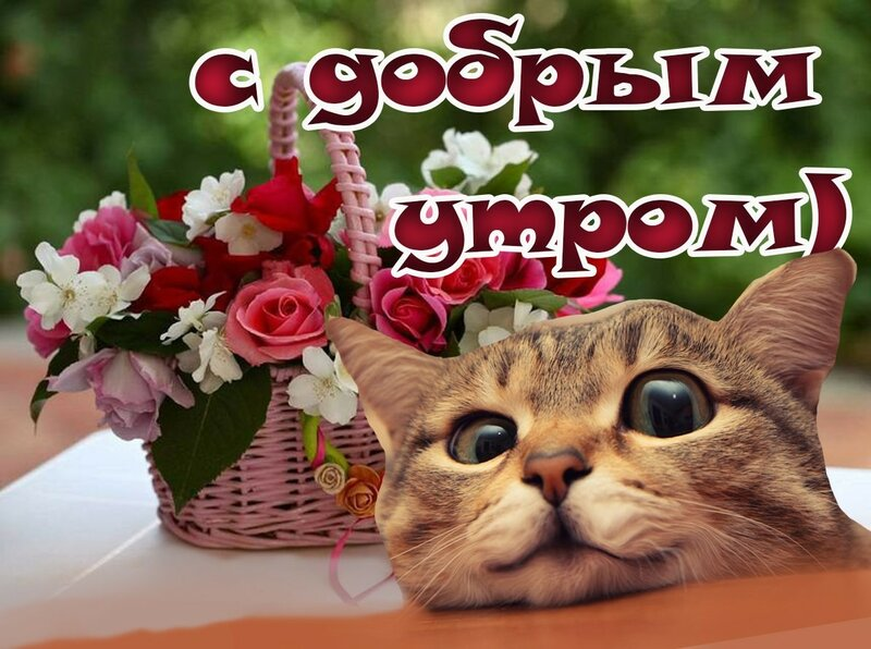 Открытка с добрым утром котеночек
