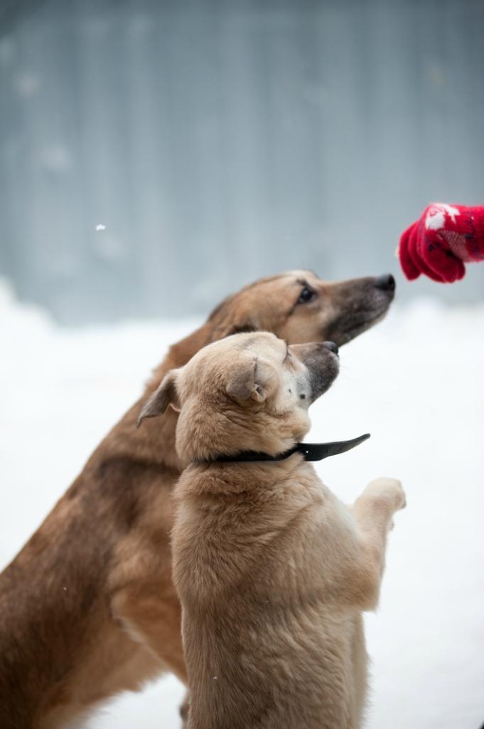 Молли собака из приюта догпорта