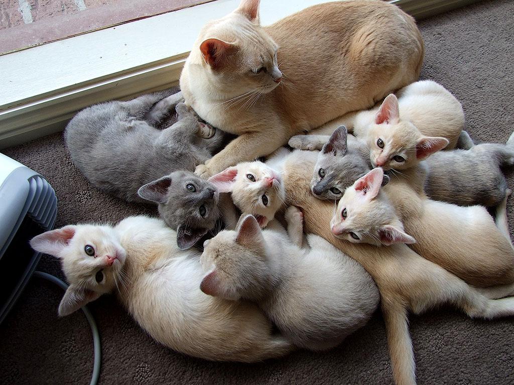 22. Если у кошки вдруг появились котята, их можно подарить друзьям.