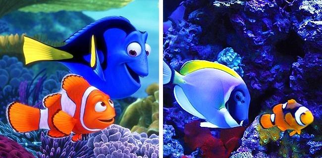 © Pixar  © imgur   Хей-Хей «Моана»