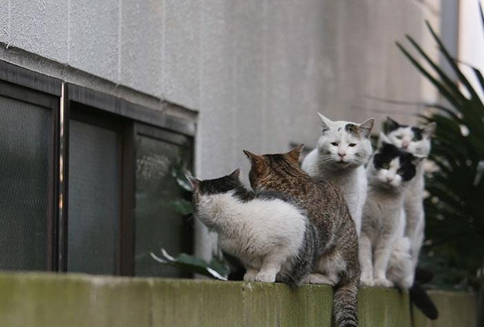 Несмотря на то, что все эти кошачьи морды являются бездомными они не выглядят изголодавшимися ил