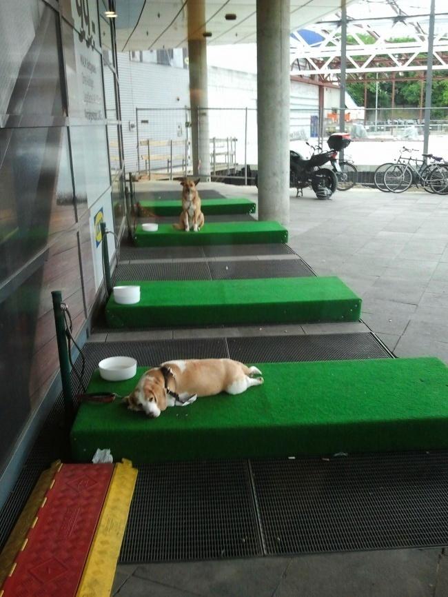 Внемецкой IKEA есть такие «парковки» для собак, чтобы хозяева неоставляли ихвмашине.