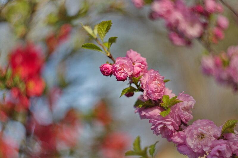 В розовых тонах