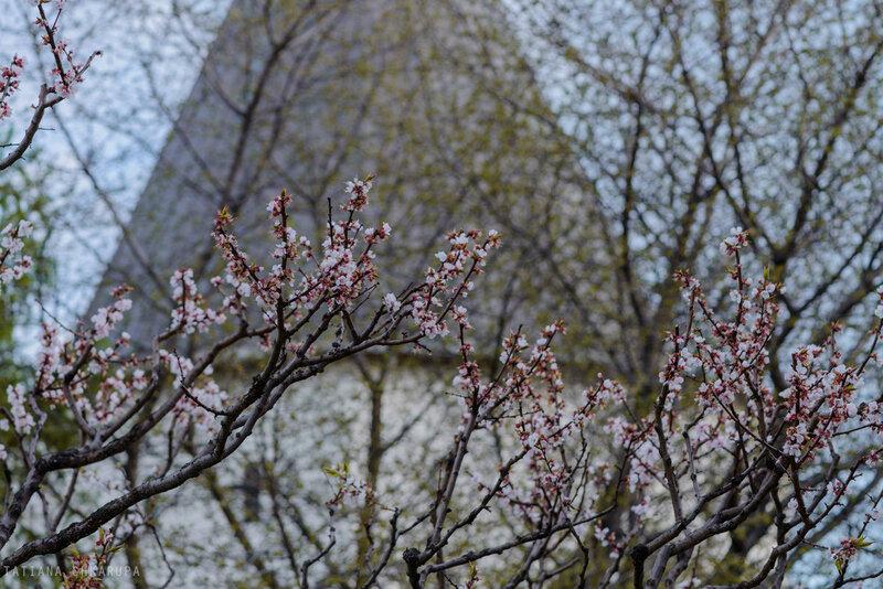 Цветение в Новосспаском
