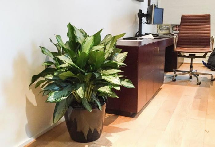 Полезные растения для жилища