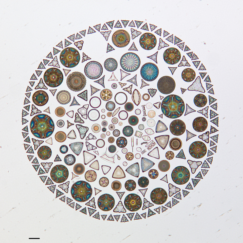 Artistic Arrangements of Microscopic Algae Viewed Through a Microscope