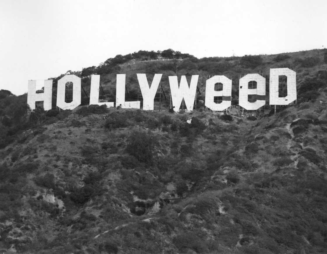 The giant letters of Hollywood transformed into Hollyweed!