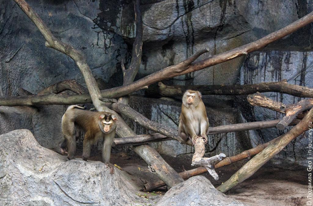 зоопарк као кео самостоятельно