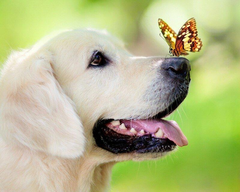 с бабочкой.jpg
